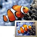 Рыбка-клоун Алмазная вышивка мозаика Гранни