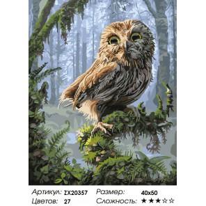 Количество цветов и сложность Совенок в сказочном лесу Раскраска картина по номерам на холсте