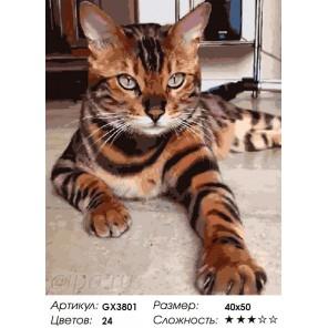 Бенгальская кошка Раскраска картина по номерам на холсте