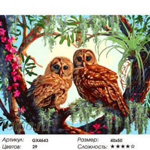 Количество цветов и сложность Пара сов Раскраска картина по номерам на холсте