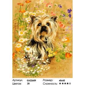 Количество цветов и сложность Йокшир на лугу Раскраска картина по номерам на холсте GX22609