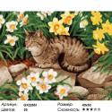 Кот в нарциссах Раскраска картина по номерам на холсте