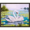 В рамке N181 Лебеди и кувшинки Раскраска картина по номерам на холсте