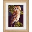 Owl Набор для вышивания LanArte