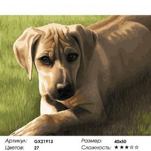 Сложность и количество красок  Риджбек Раскраска картина по номерам на холсте GX21913