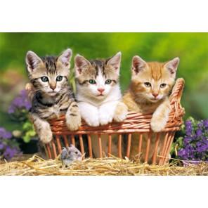 Три котенка Пазлы Castorland B51168