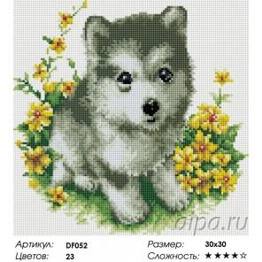 Сложность и количество цветов  Щенок хаски Алмазная мозаика вышивка на подрамнике DF052