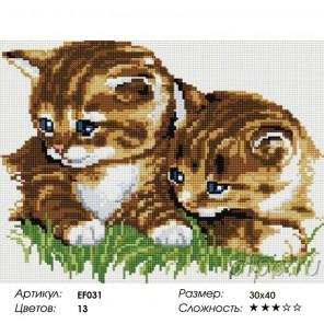 Сложность и количество цветов  Два котенка Алмазная мозаика вышивка на подрамнике EF031