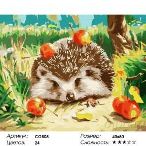 Сложность и количество красок Ёжик Раскраска по номерам на холсте CG808