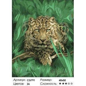 Сложность и количество красок  Гепард в траве Раскраска по номерам на холсте CG791