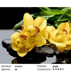 Желтые орхидеи Раскраска картина по номерам на холсте GX5361