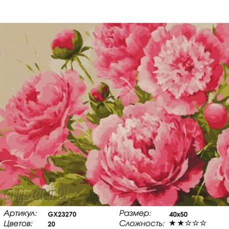 GX23270 Крупные пионы Раскраска картина по номерам на ...