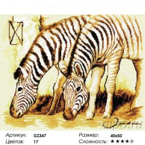 Сложность и количество цветов  Зебры Алмазная мозаика на подрамнике GZ347