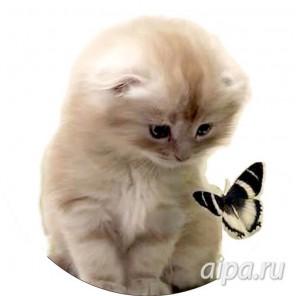Милый котенок Набор для вышивания VC010