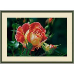 Чайная роза Набор для вышивания бисером GALLA COLLECTION