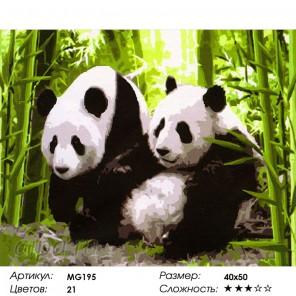 Две панды в зарослях бамбука Раскраска (картина) по номерам акриловыми красками на холсте Menglei