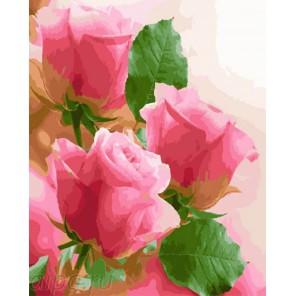 Розовое трио Раскраска по номерам на холсте GX23781