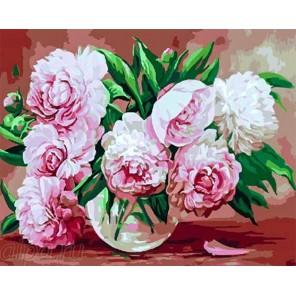 Нежно-розовые пионы Раскраска по номерам на холсте GX23480