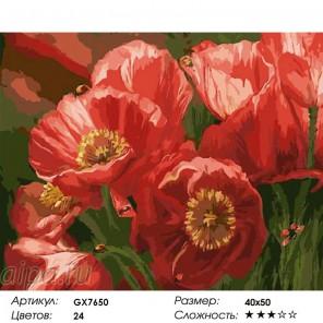 Сложность и количество цветов  Полевые маки Раскраска картина по номерам на холсте GX7650