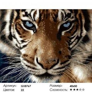 Сложность и количество цветов Взгляд тигра Раскраска картина по номерам на холсте GX8767