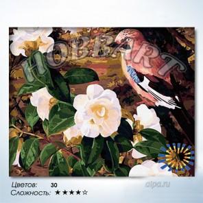 Количество цветов и сложность Птичка певчая Раскраска по номерам на холсте Hobbart HB4050078