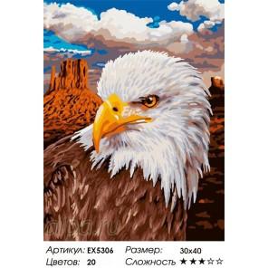 Белоголовый орлан Раскраска по номерам на холсте