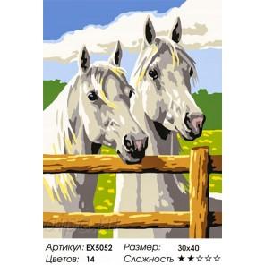 Пара лошадей Раскраска по номерам на холсте
