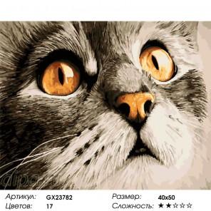 Сложность и количество цветов  Изумление Раскраска по номерам на холсте GX23782