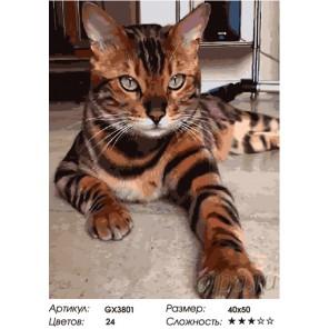 Количество цветов и сложность Серьезный кот Раскраска картина по номерам на холсте GX3801