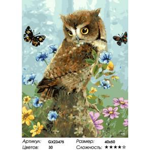 Количество цветов и сложность Летняя сова Раскраска картина по номерам на холсте GX23475