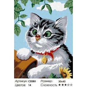 Сложность и количество цветов  Котёнок Раскраска по номерам на холсте CE085