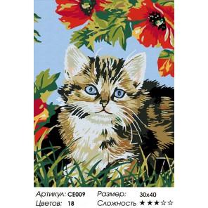 Сложность и количество цветов  Котенок в цветах Раскраска по номерам на холсте CE009