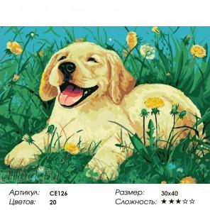 Сложность и количество цветов  Пёс на лужайке Раскраска по номерам на холсте CE126