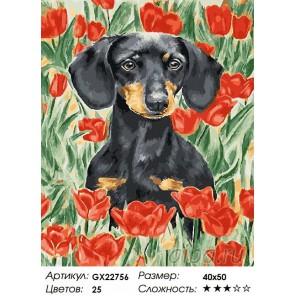 Количество цветов и сложность Такса на маковом поле Раскраска картина по номерам на холсте GX22756