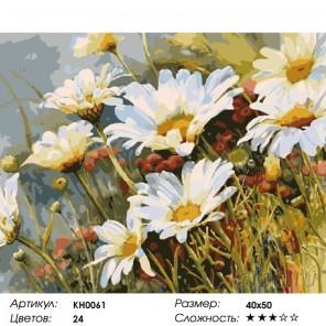 Полевые ромашки Раскраска картина по номерам на холсте