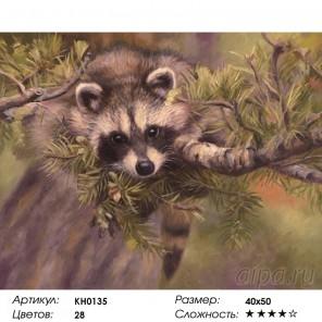Количество цветов и сложность Енотик Раскраска картина по номерам на холсте KH0135