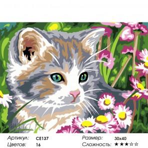 Количество цветов и сложность Дымчатый котёнок Раскраска картина по номерам на холсте CE137