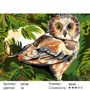 Количество цветов и сложность Лесная история Раскраска картина по номерам на холсте CE135