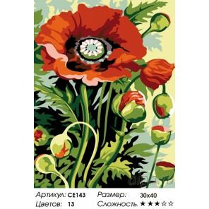 Количество цветов и сложность Полевой букет Раскраска картина по номерам на холсте CE143