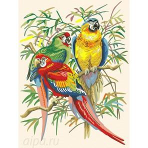 Попугаи Раскраска по номерам на холсте