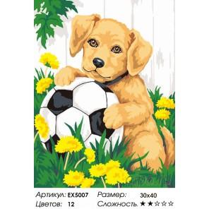Количество цветов и сложность  Щенок с мячиком Раскраска картина по номерам на холсте EX5007