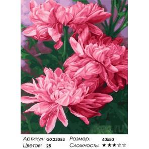 Хризантемы Раскраска картина по номерам на холсте