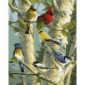 Пение птиц Раскраска картина по номерам Plaid