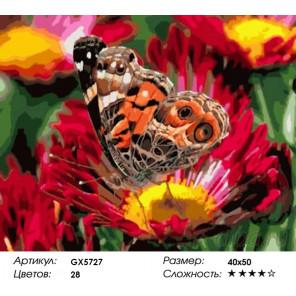 Разноцветное лето Раскраска по номерам на холсте Menglei