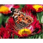 Разноцветное лето Раскраска по номерам на холсте Menglei Z-GX5727