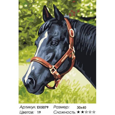 Z-EX5079 Черный конь Раскраска картина по номерам ...