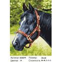 Количество цветов и сложность Черный конь Раскраска картина по номерам акриловыми красками на холсте Menglei Z-EX5079