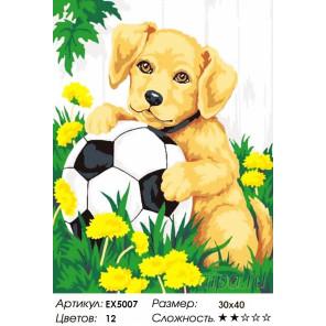Количество цветов и сложность Щенок с мячиком Раскраска картина по номерам акриловыми красками на холсте Menglei Z-EX5007