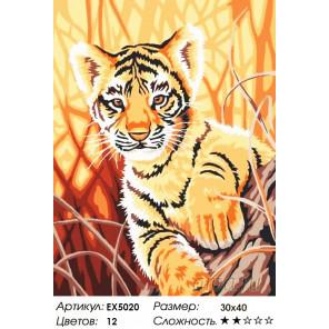 Количество цветов и сложность Тигренок в джунглях Раскраска картина по номерам акриловыми красками на холсте Menglei Z-EX5020