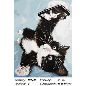 Котенок делает селфи Раскраска картина по номерам акриловыми красками на холсте Menglei